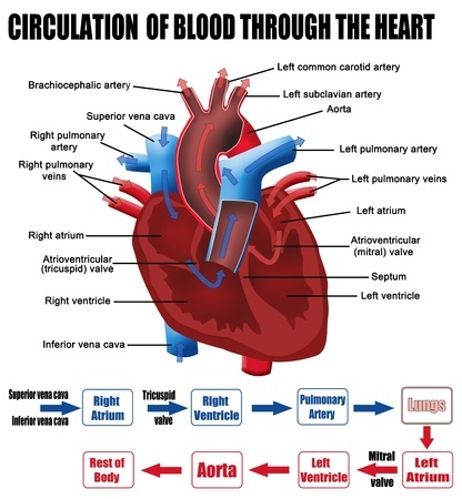 what can leaky heart valve cause